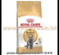 Royal Canin 英國短毛成貓配方 10kg